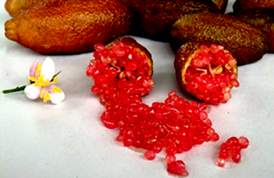 Finger Lime Ricks Red - Caviale di Limone