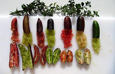 Finger Lime varietà