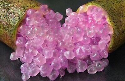 Finger Lime Purple